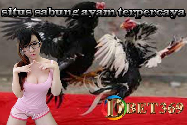 Situs Sabung Ayam Terpercaya Online 24 Jam Nonstop